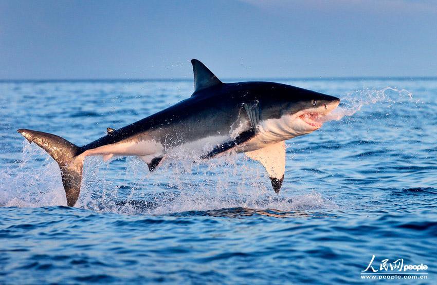 Daniele Patucchi - Shark!