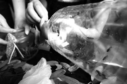 卖家将萤火虫分装到玻璃瓶中出售,不少网友表示反对