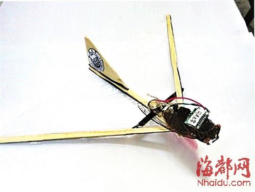 苍蝇微型飞行器 仿昆虫微型飞行器图片