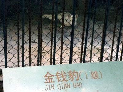 """金钱豹笼子中的""""金钱豹"""""""