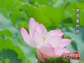 赏荷紫竹院