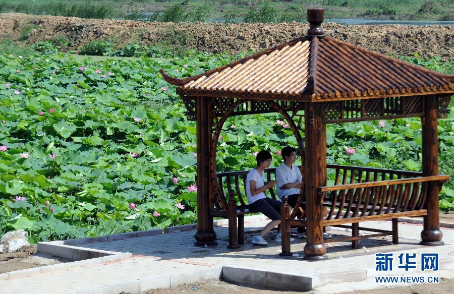 河北 风景 香河 荷花/8月17日,游人在湿地公园的湖心亭内观赏风景。