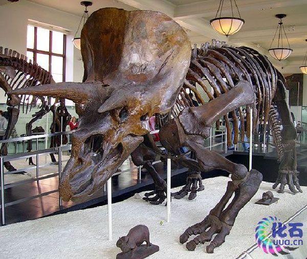 盘点恐龙前统治地球的动物:或是人类祖先(图)(1)