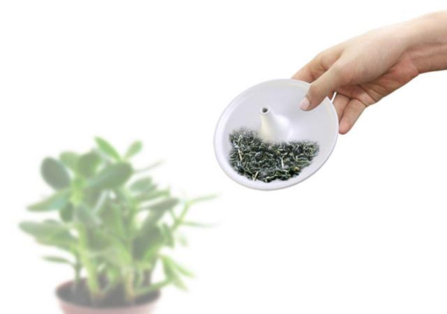 郭言赛/用看似在生长的茶树泡一壶香茶...