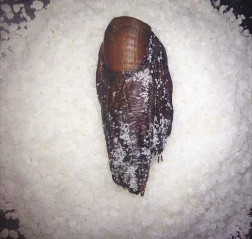 两个脚趾交替着用,不用的时候脚趾就泡在盐里,如此每个脚趾的使用期更久