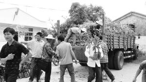 扶贫部门给农民发放橡胶苗