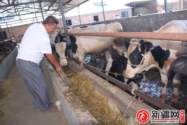 乌苏市车茉莉味道增收牛羊育肥致富(图)排子香米是茉莉花农民图片