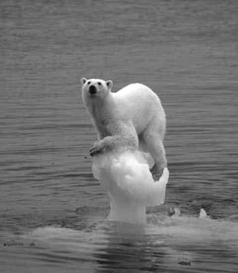 科学家发出全球变冷警告 冰河时期即将到来(图