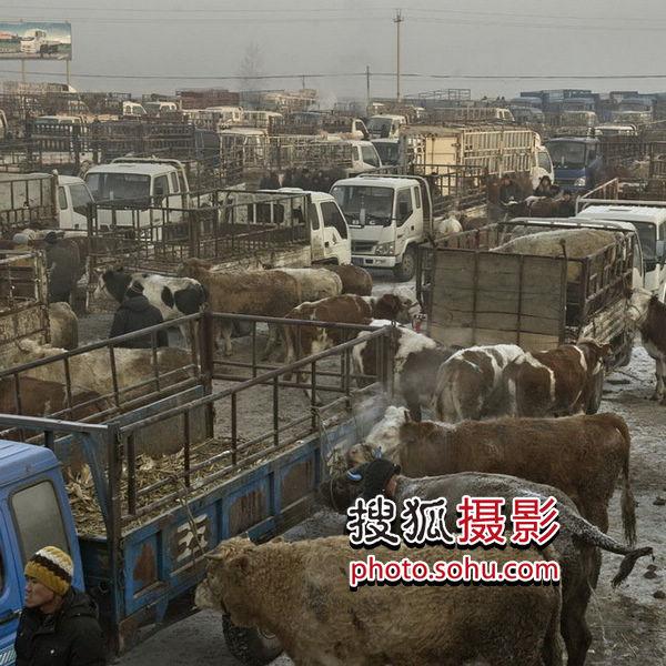 刘征——《牛市》