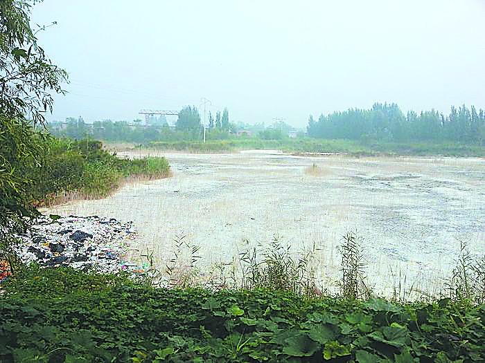 武邑何庄村40亩大坑排满污水臭气熏天