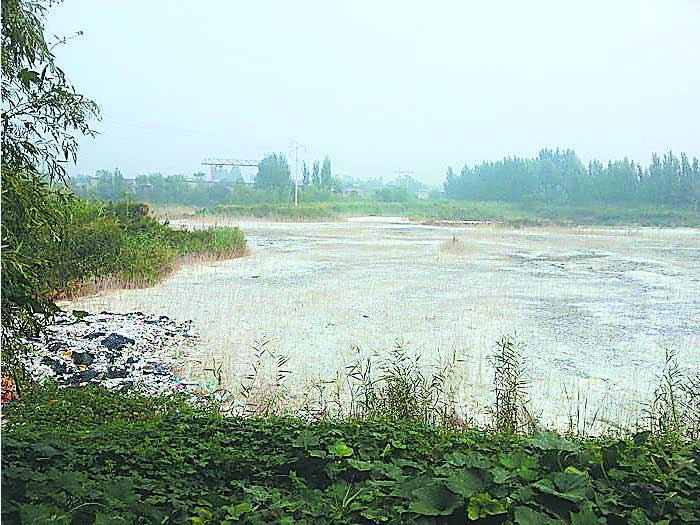 村内的污水坑让村民深恶痛绝