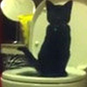 美国男子难忍猫沙臭味 小猫用抽水马桶(图如何训练猫咪用马桶