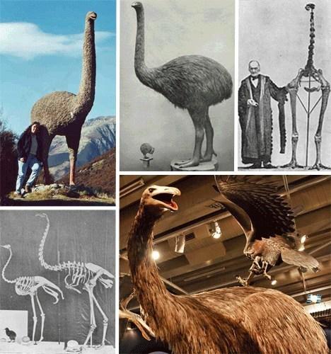 历史上曾经出现过的奇葩动物(组图)