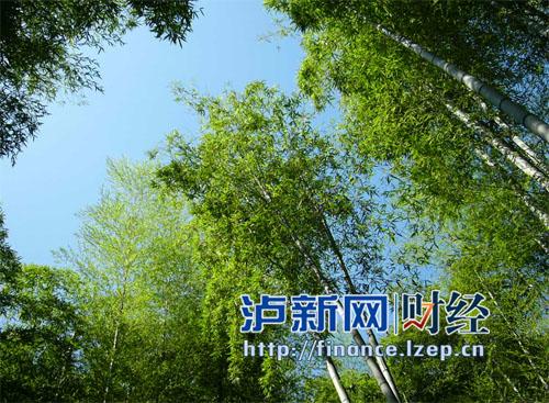 竹产业成泸州林业产业发展主要增长极(图)