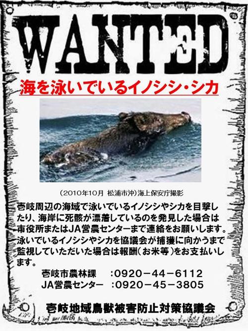 """日本长崎县壹岐市日前发布了一张""""注意会游泳的野猪""""的海报,提醒民众注意安全"""