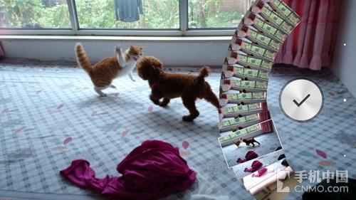 Xperia Z1时光平移拍摄的猫狗大战