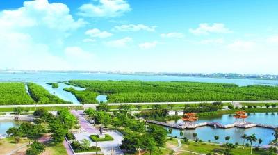 图为面积5000多亩,全国面积最大的人工成林红树林.图片