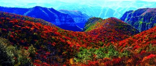 """今日,2013年焦作红叶节在青天河景区开幕,""""青天河·红叶海·红动中国""""成为本次活动的主题。"""