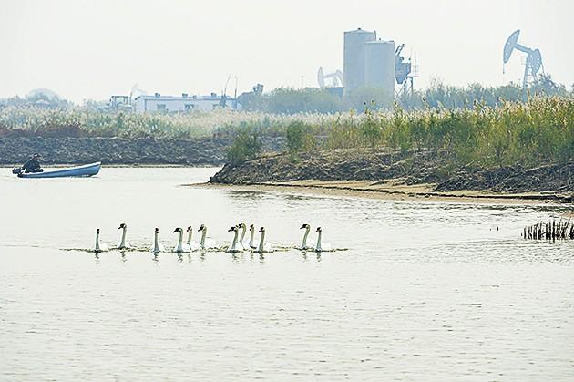 黄河口 组图 神奇 湿地/神奇的黄河口湿地(组图)
