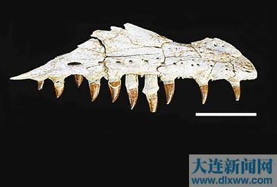 动物牙齿链制作