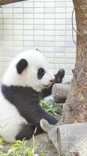 台北市立动物园供图