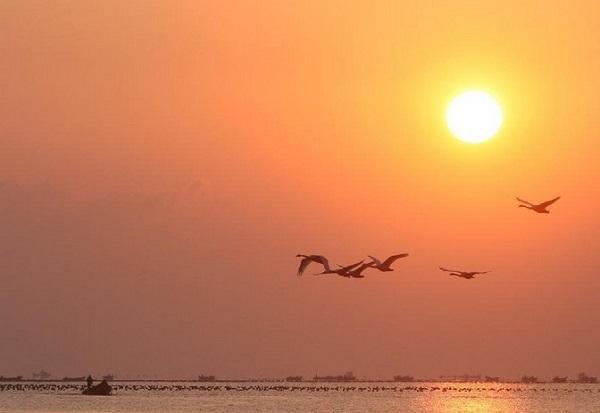 夕阳下翱翔的天鹅-鸟儿也怕冷 相约到水草丰茂的南方晒太阳图片