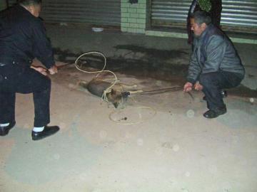 镇上的流浪狗被捕杀。