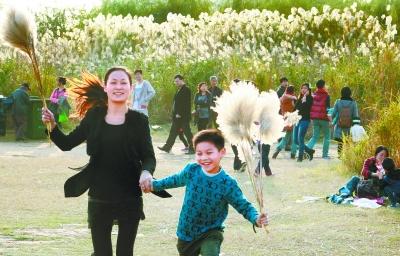 昨天,市民在汉口江滩芦花丛中穿越,近距离体验芦花之美。记者 蔡晓智 摄