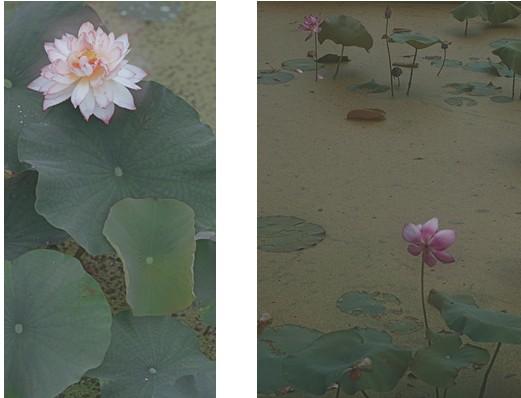 爱普生影艺坊《镜中看花—周祖尧花卉摄影作品展》即将开展