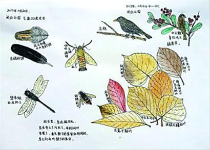关于银杏的手抄报图片-银杏树的资料和图片 秋天的银杏叶图片 夏天的