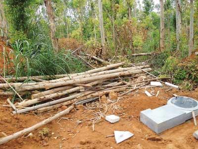 被毁的林木