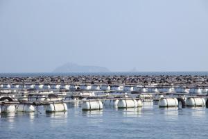 财神岛海参:全产业链塑造提供最放心原生态品质(组图)图片
