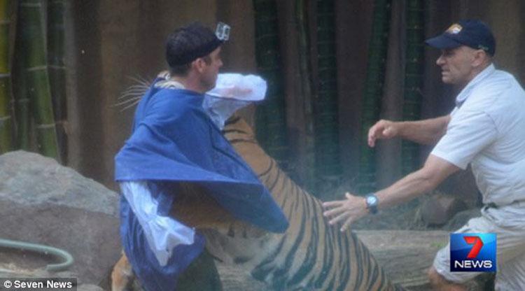 澳大利亚动物园一老虎将驯兽师拖入水中咬伤(高清组图