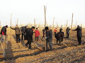 图为植树造林现场图片