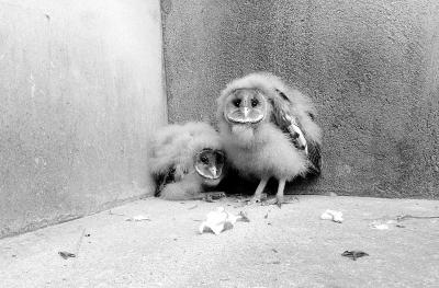 """小猴面鹰很""""认生""""。见习记者孔轩 摄"""