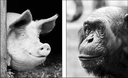 美国4岁男童落进猩猩池 园方无奈枪杀大猩猩