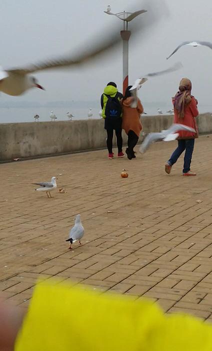 海埂大坝两个年轻女子偷抓海鸥的一幕被网友抓拍下来 网友供图