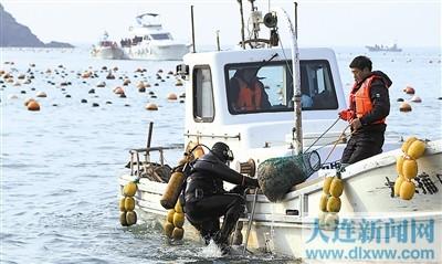 """>海湾岛海洋海参地区将限量上市(图)本报讯长海鲈鱼是""""松江牧场靖海参大连獐子保护区图片"""