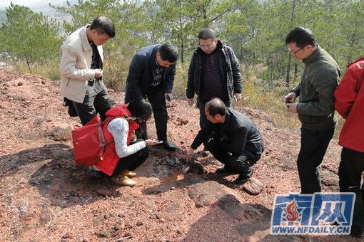 国家古生物化石专家组到南雄考察 中国恐龙之乡 图