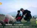 《爸爸去哪儿片花》第十期 赛猪篇:天天受挫欲换爸 森蝶开挂遛猪