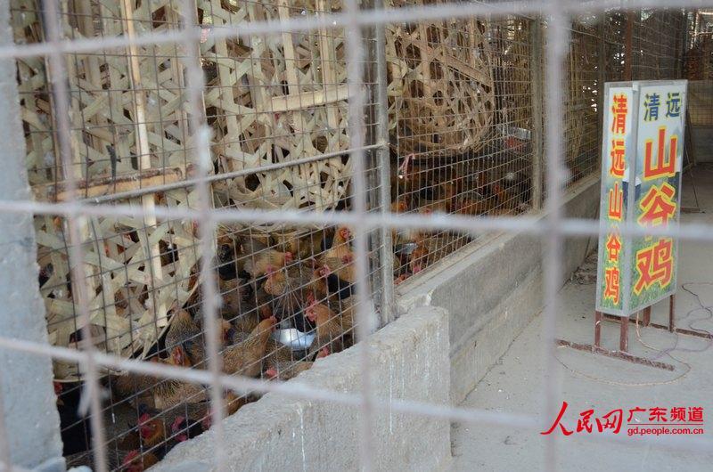广州市江村家禽批发市场部分档口内仍可以看到被关闭圈养的鸡群.图片