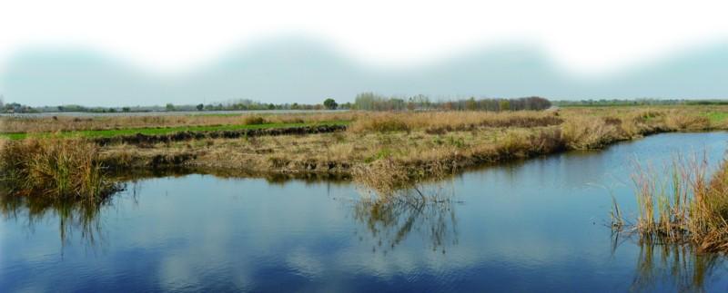 镜头一莱西日庄湿地 2000亩湿地百鸟齐飞