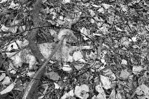 被电死的野猫