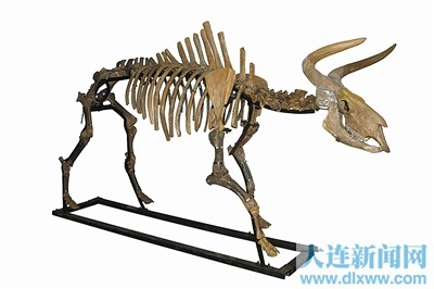 原始动物的画法