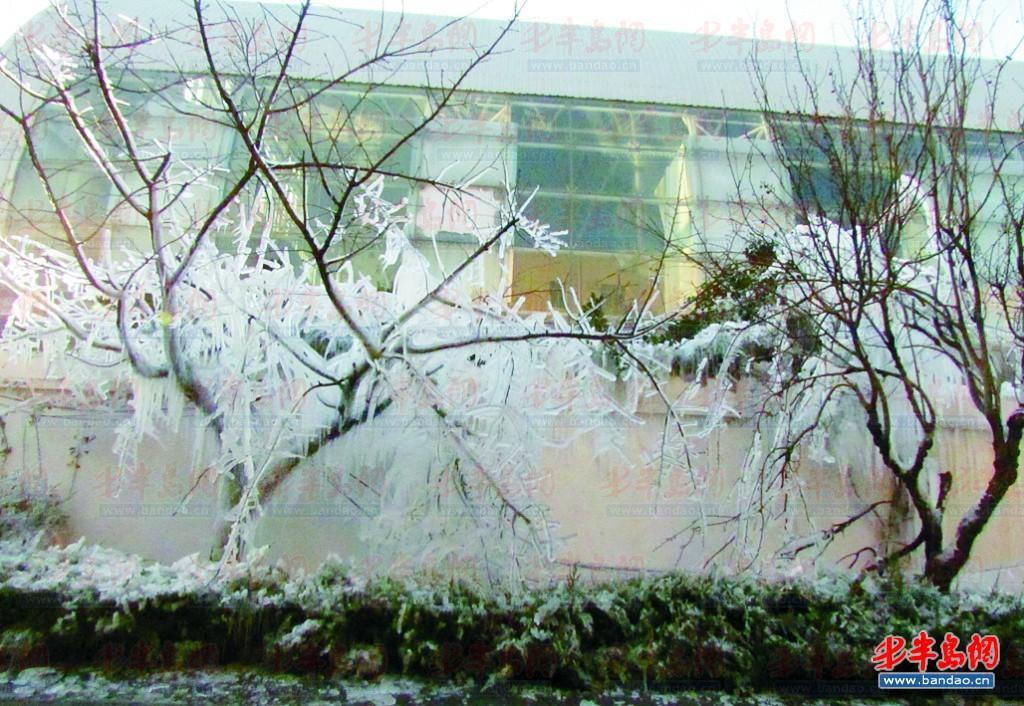 华电青岛发电有限公司水管爆裂,喷到树上的水结成了冰花