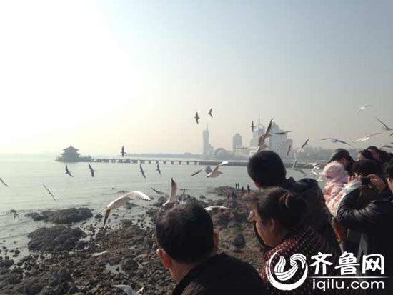 虽然维修中的栈桥还没有开放,但栈桥海水浴场周边仍有众多游客。图为游客在喂海鸥。
