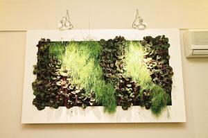 """绿植""""变入""""室内墙图片"""