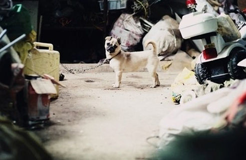 """衡阳 儿子/乖巧的小狗是夫妻俩忠实的""""伴侣""""。"""