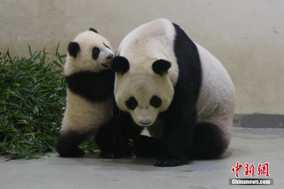 壁纸 大熊猫 动物 940_628