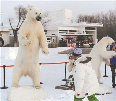 哈尔滨太阳岛国际雪雕艺术博览会近日推出极地动物标本展,数头形态各
